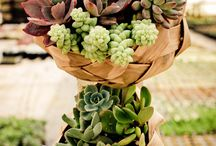 Fun with Succulents / by Chiara Piccinotti