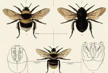 Bugs / by Anna Scott
