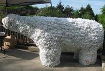 Polar Bear & Arctic Crafts/Activities / by Polar Bears International