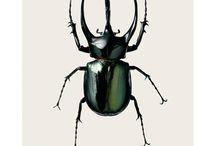 beetles / by Sabine Parker