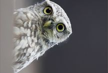 owls r my obsession / by Melissa Everson