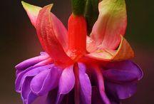 garden - flowers / by Beverley Gillanders