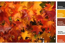 autumn / by Lucille Hall