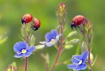 flowers / by Monica Greer