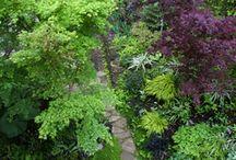 Shade Gardens / by lifebeginsatthirty