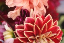 Fleurs / by jenifleur-de-lis
