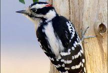 I love birding  / by Bev Garretson