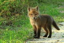 Foxey / by Barbara Stover