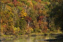 Arkansas / by Nathan Kyles