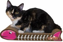 NTR's Gift Guide: Pets!  / by Keep A Breast Foundation