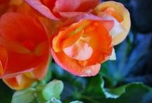 Flower / by brianne hanson