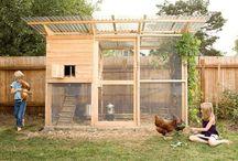 Chicken Coops / by Tim Bertie
