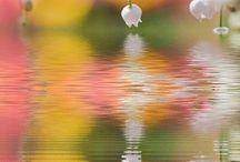 Flowers / by Mark Tripp