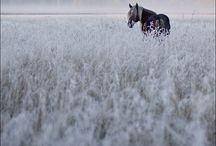 I Dream in Horses / All things horses / by Susan Dempster
