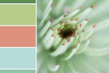 Color my world / Color palette  / by Leslie Handal