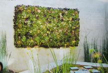 Living walls and art  / by Jenny White Schnitzer