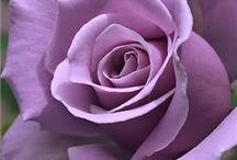 Roses / Roses / by Greg Mayorga
