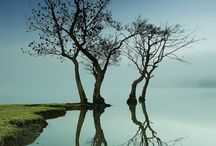 Photography > Reflections / by Sherry Hopkins