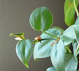 Home - indoor garden / Bringing the beauty of nature inside / by Beth Stedman