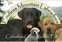 Endless Mountain Labradors / by Endless Mountain Labradors