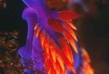 Splendid SLUGS of the SEA / Sea Slugs-oVER 3000 Species+ / by Cyndi Reilly-Rogers