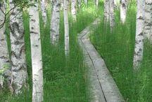 Pathway Archway / by Nancy Hunt