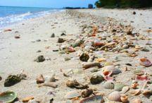 Beach / by Amanda Finkenbine