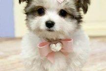 Cute / by Cassandra Rendon