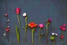Oh! Les jolies fleurs! / Flowers land / by Amélie Grenier