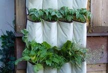 Gardening / by Mildred Sloan