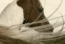 horse / by Jodi Mathis