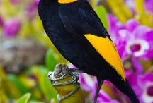 Birds / by Kev Sylvester