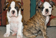 puppies / by Michele McMullen