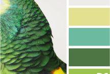 Color* / by Daniela Muñoz Villar