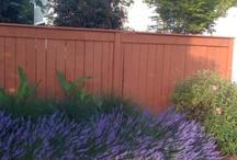 sidewalk garden / by Backyard Gardener