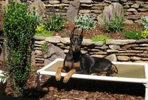 Doberman / Dobermans and their Kuranda beds! / by Kuranda Dog Beds