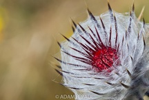 Plants & More / by Point Reyes National Seashore Association