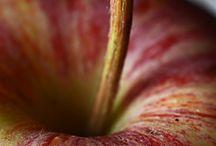 close up / by Mindy Van Oort