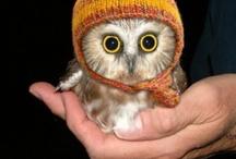 I heart owls!!!!! / by Cassandra Feigum