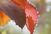 When Autumn Leaves Fall~ / by Lisa Wildes