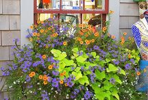 Window Boxes / by Lisa Lamberger