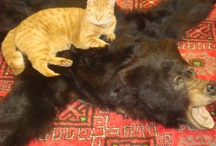 Kittehs (and other endearing animals) / by Marcy