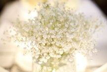 Centerpieces / by Katherine Ramakers