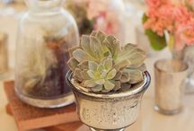 succulents / by Denise Horth