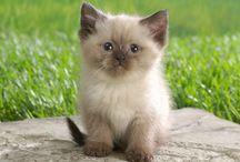 Cute Animals / by Carolyn Quick