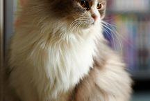 Animal - Cat / by Veren Evania