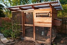 Let's build a coop!  / Plans and inspiration for a chicken coop at our new house !!  / by Brittany Westall