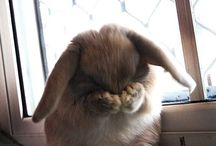 My bunny. / by Olivia Vialpando