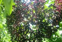 Herbal Identification / by Herbal Roots zine