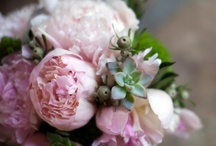 Lucy and Dan / by Philosophy Flowers Official